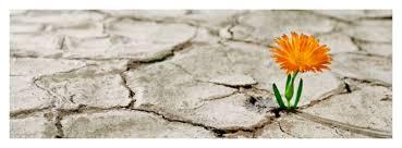 bloem steen